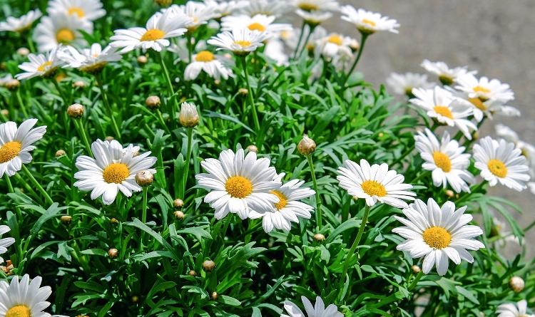 Doniczki Plastikowe Na Kwiaty Balkonowe