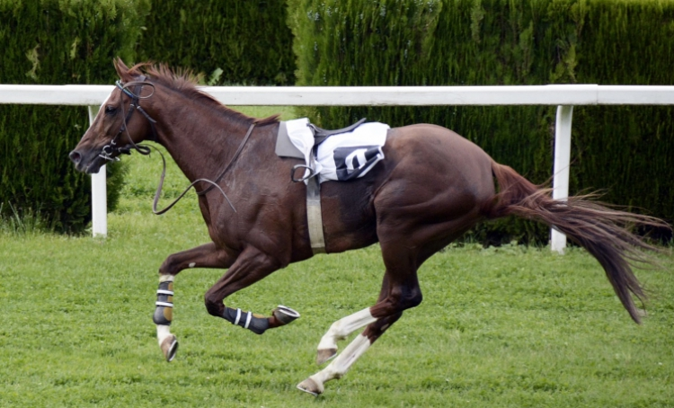 Horse racing – one of the most exciting sports
